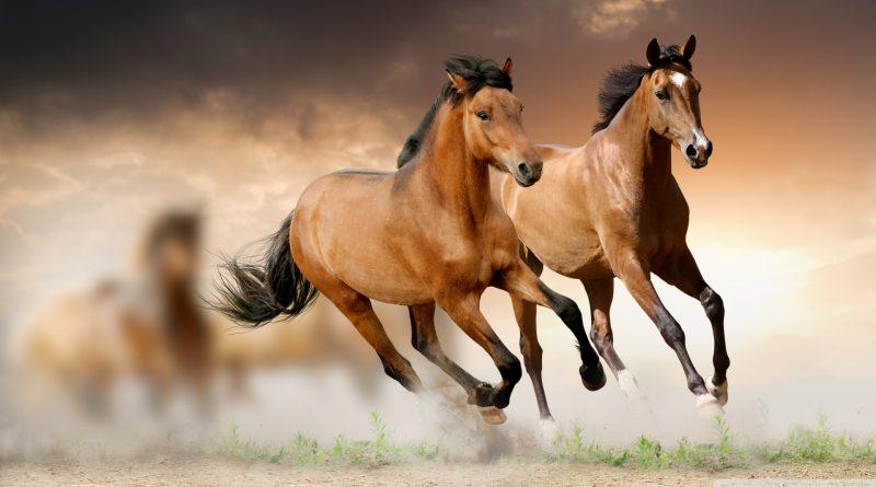 horses-entete